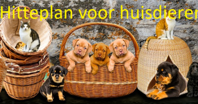 Hitteplan voor huisdieren